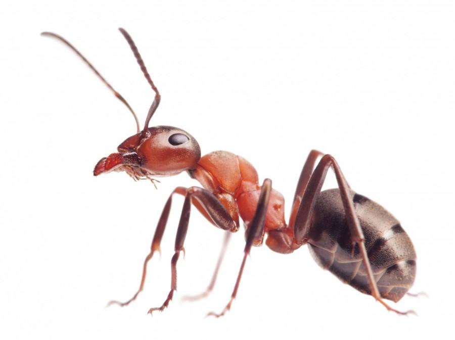 ללמוד ניהול מהנמלה..